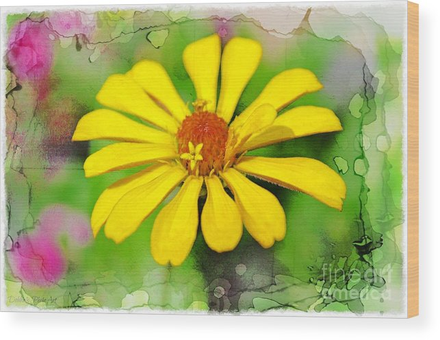Flowers Wood Print featuring the photograph Summer Zinnia by Debbie Portwood