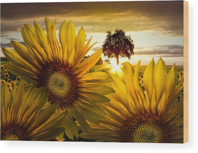 American Wood Print featuring the photograph Sunflower Heaven by Debra and Dave Vanderlaan