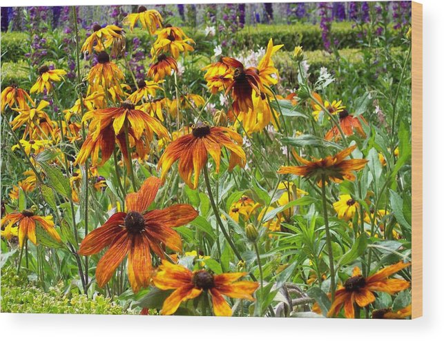 Sunflowers Wood Print featuring the photograph Sunflowers And Friends by Jean Booth