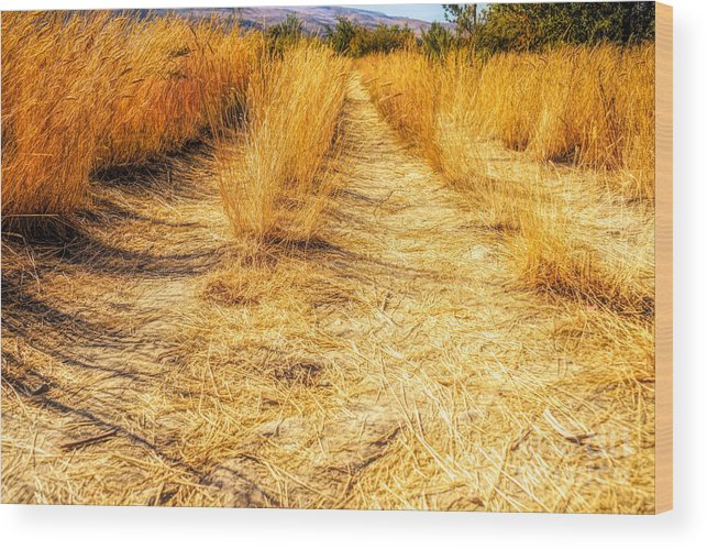 Fall Wood Print featuring the photograph Sunlit Grasses by Wendy Elliott