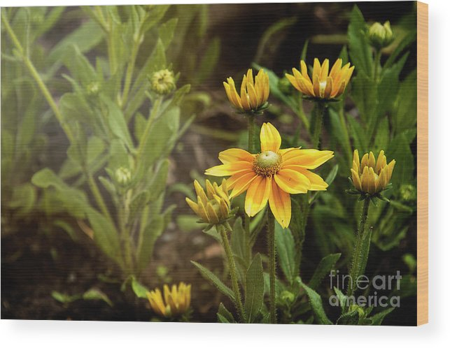 Bloom Wood Print featuring the photograph Sunny Day by Audrey Wilkie
