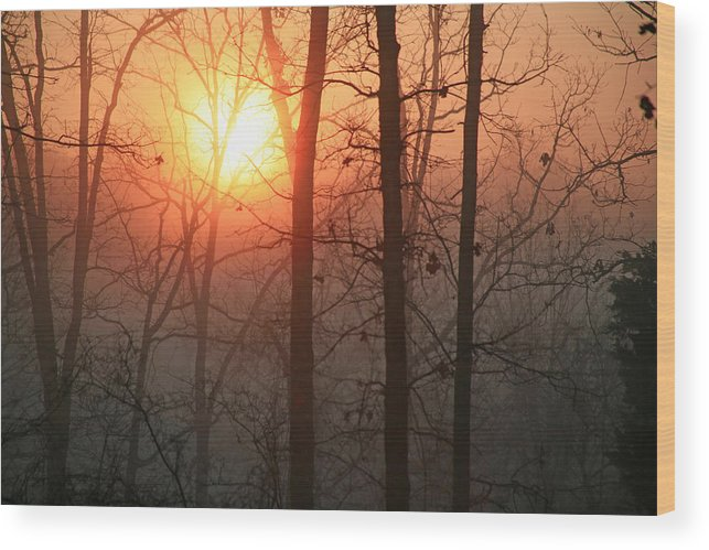 Sunrise Wood Print featuring the photograph Sunrise In A Foggy Wood by James Jones