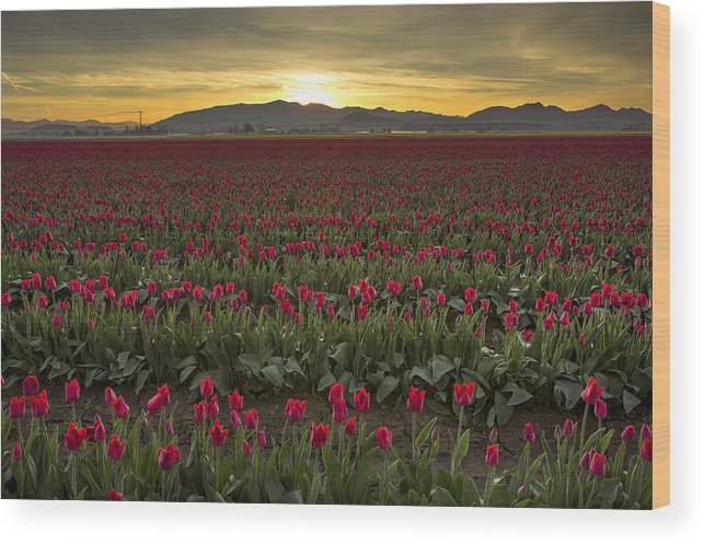 Sunrise Wood Print featuring the photograph Sunrise In Skagit Valley by Bob Stevens