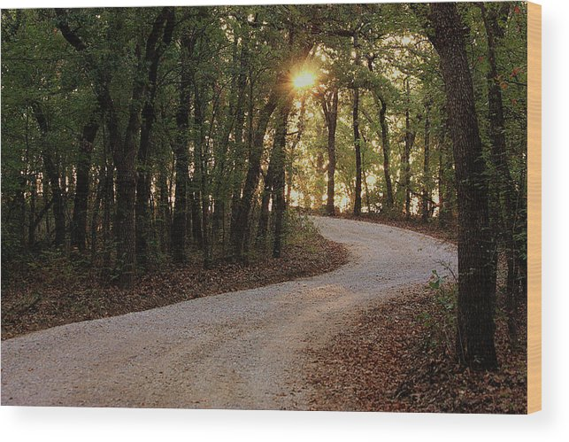 Nature Wood Print featuring the photograph Sunrise Through The Woods by Sheila Brown