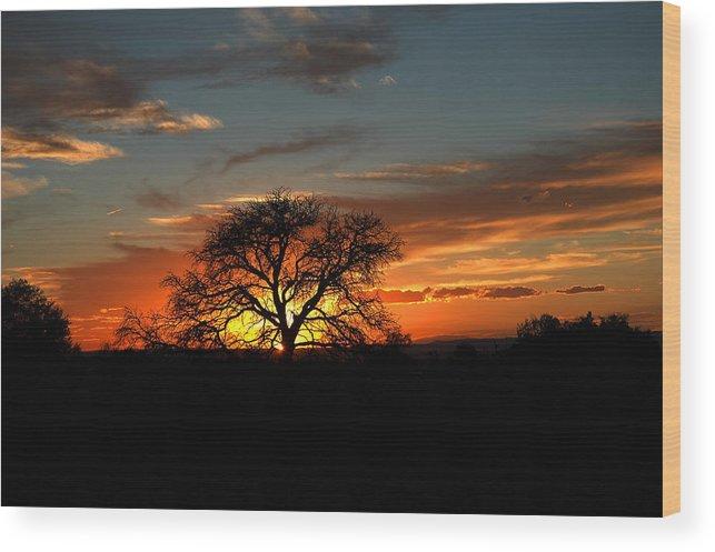 Sunset Wood Print featuring the photograph Sunset Tree by Burt Plotkin