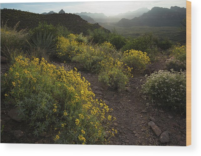 Spring Wood Print featuring the photograph Superstition Spring by Sue Cullumber