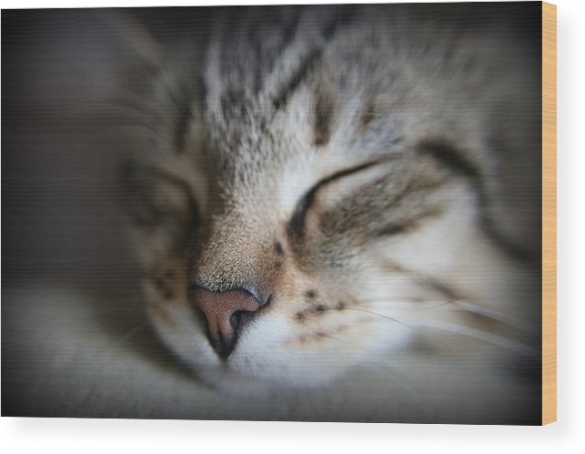 Kitten Wood Print featuring the photograph Sweet Baby Jack by Lisa Hurylovich
