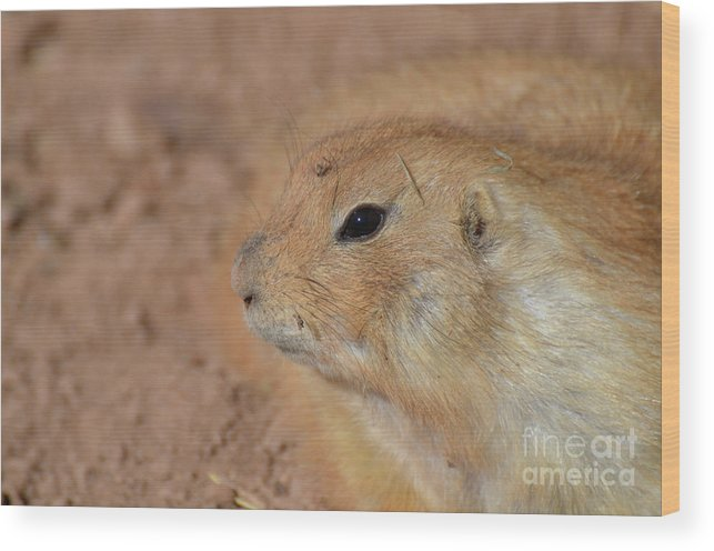 Prairie-dog Wood Print featuring the photograph Sweet Face Of A Prairie Dog Up Close And Personal by DejaVu Designs