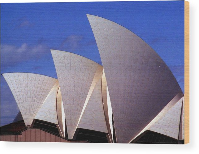 Australia Wood Print featuring the photograph Sydney Harbor Fins by Robert M Brown II