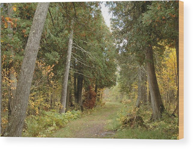 Landscape Wood Print featuring the photograph Tettegouche State Park by Kathy Schumann