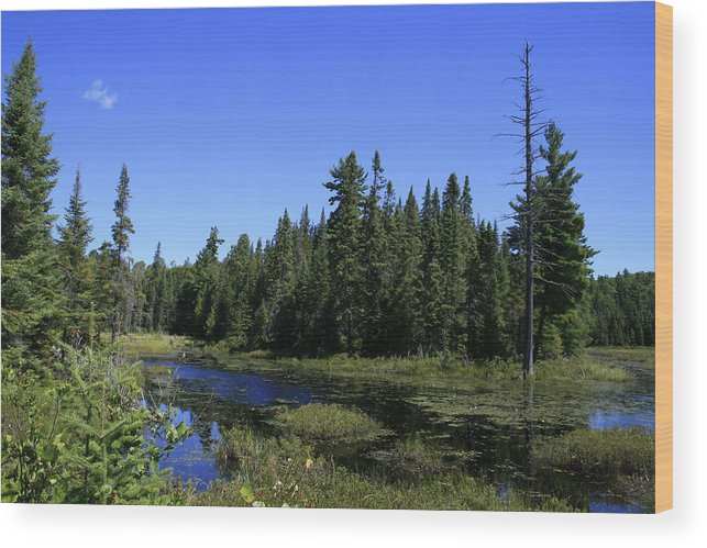 Landscape Wood Print featuring the photograph Thank You Mother by Alan Rutherford