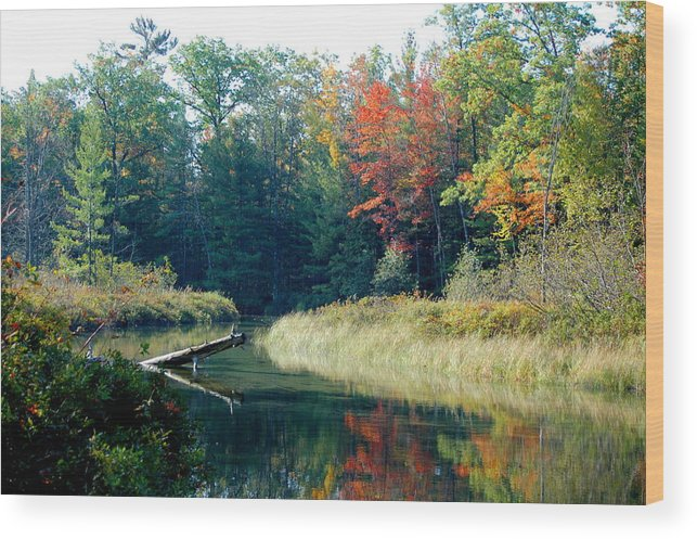 Landscape Wood Print featuring the photograph The Beginning Of Fall by Jennifer Englehardt
