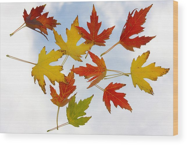 Wood Print featuring the photograph The Colors Of Fall by James BO Insogna