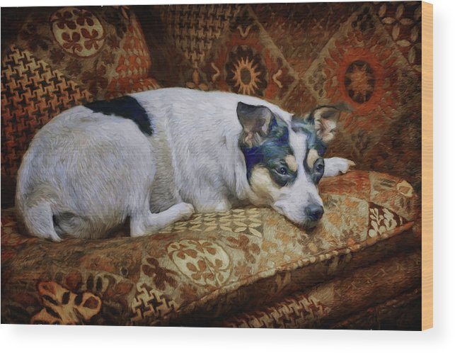 Dog Wood Print featuring the photograph The Comforts Of Home by Nikolyn McDonald
