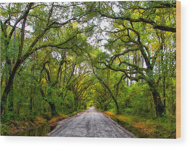 Edisto Island Wood Print featuring the photograph The Emerald Forrest by Carol Ward