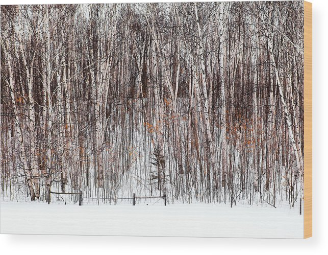 Trees Wood Print featuring the photograph The Fence by Linda McRae