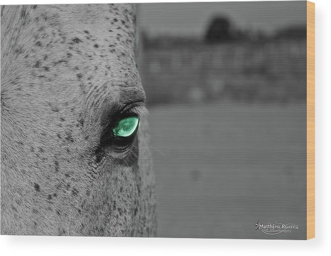 Wood Print featuring the photograph The Green Eyed Horse by Matthieu Russell
