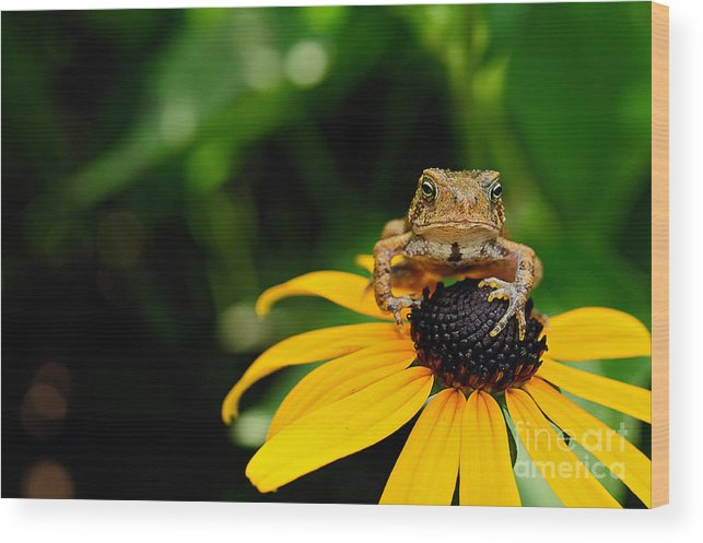 Toad Wood Print featuring the photograph The Harbinger by Lois Bryan