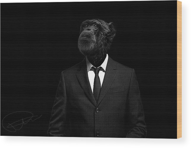Chimpanzee Wood Print featuring the photograph The Interview by Paul Neville