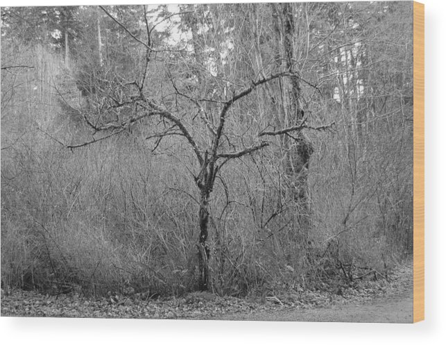 Black Wood Print featuring the photograph The Scary Little Tree by J D Banks