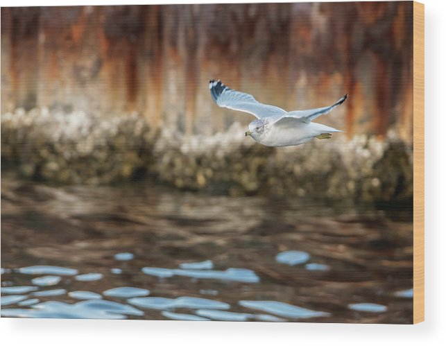 Seagull Wood Print featuring the photograph The Soaring Gull by Melissa Sniderhan