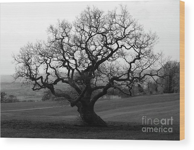 Oak Tree Wood Print featuring the photograph The Tree by Mark Hughes