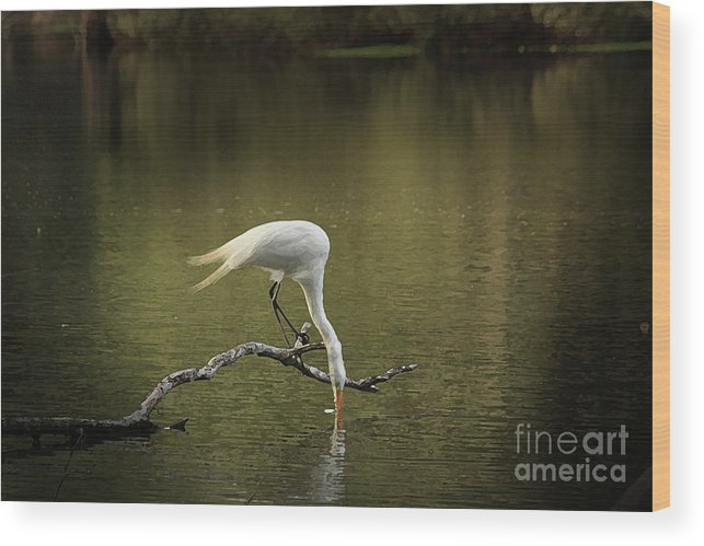 Heron Photographs Wood Print featuring the photograph Thirst by Kim Henderson