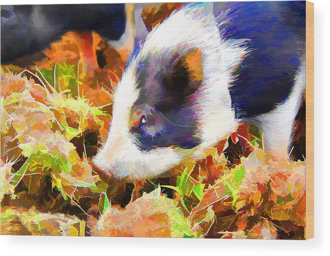 Pig Wood Print featuring the photograph This Little Piggy by Josh Manwaring