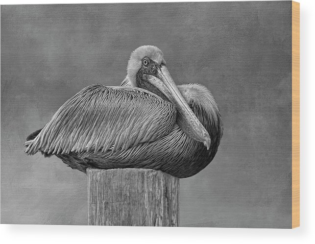 Black And White Pelican Wood Print featuring the photograph Time To Rest 2 by HH Photography of Florida