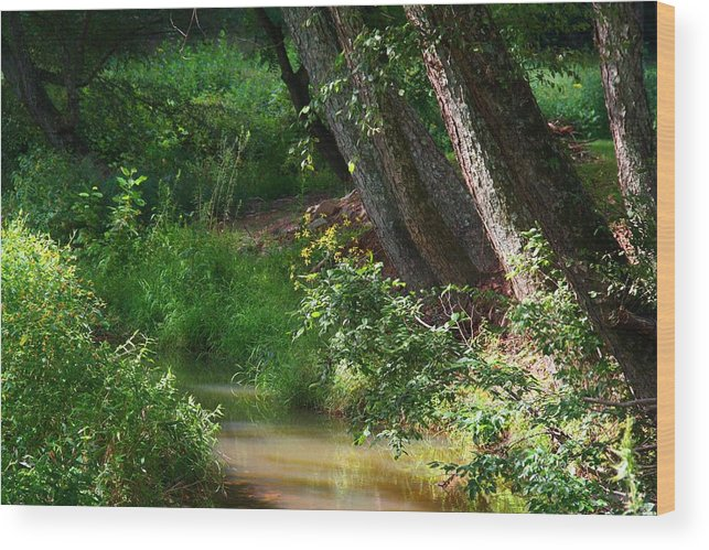 Toms Creek Wood Print featuring the photograph Toms Creek In Late Summer by Kathryn Meyer