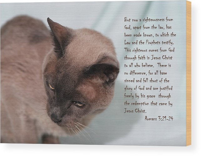 Scripture Wood Print featuring the photograph Tonkinese Cat Romans 3 V 21-24 by Linda Phelps