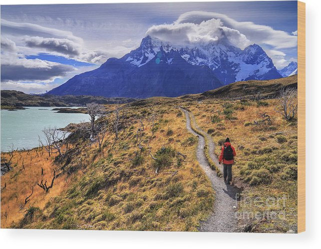 Torres Del Paine Chile Patagonia Wood Print featuring the photograph Torres Del Paine 21 by Bernardo Galmarini