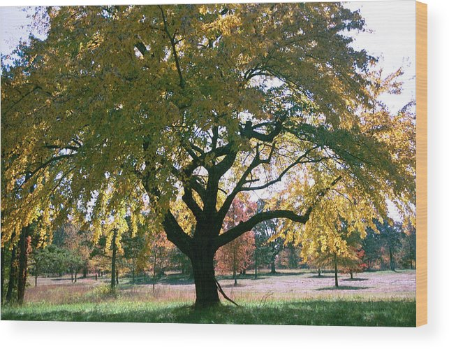 Tree Wood Print featuring the photograph Tree by Flavia Westerwelle