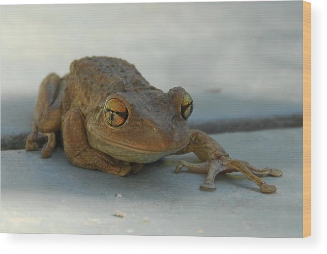 Frog Wood Print featuring the photograph Tree Frog Out For A Walk by Alan Lenk