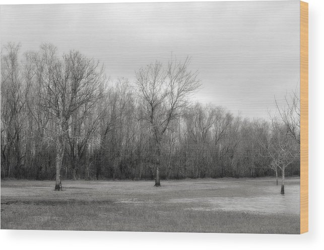 Landscape Wood Print featuring the photograph Tree Line by Jonathan Garrett