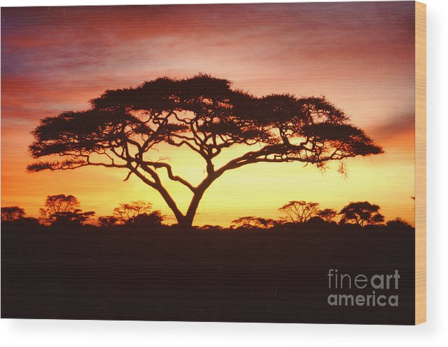 Tree Wood Print featuring the photograph Tree Of Life Africa by Jerome Stumphauzer