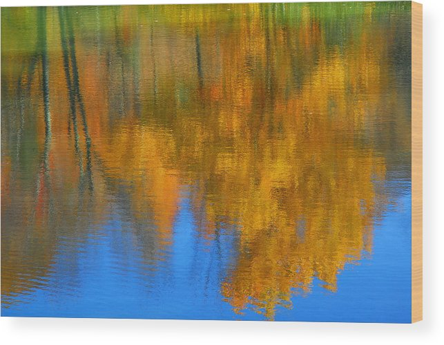 Fall Color Wood Print featuring the photograph Tree Reflection 'painting' by Alan Lenk
