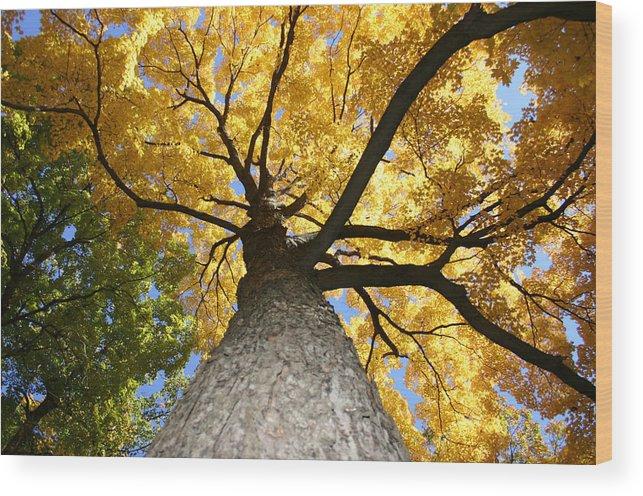 Tree Wood Print featuring the photograph Tree Trunk by Deborah Molitoris