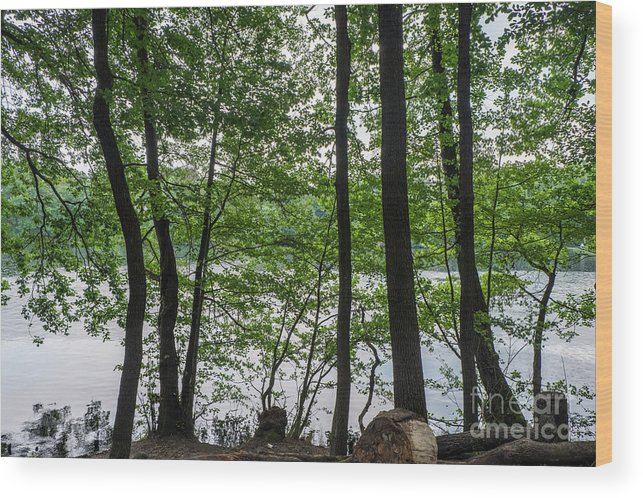 Berlin Wood Print featuring the photograph Trees At Lake Schlachtensee by Jannis Werner