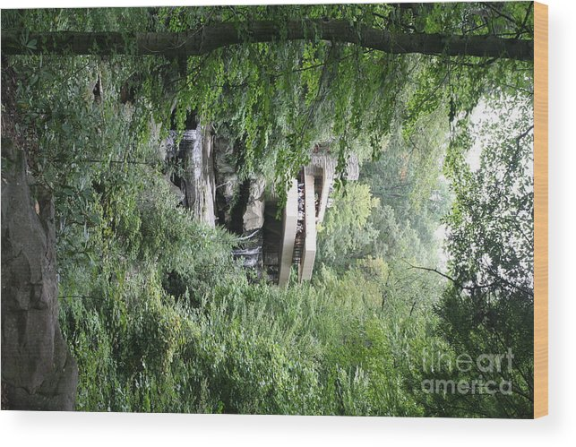 Falling Water Wood Print featuring the photograph Trees Fallingwater by Chuck Kuhn