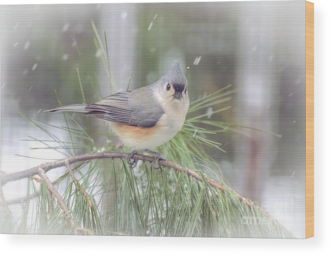 Tufted Titmouse Wood Print featuring the photograph Tufted Titmouse - A Winter Delight by Kerri Farley