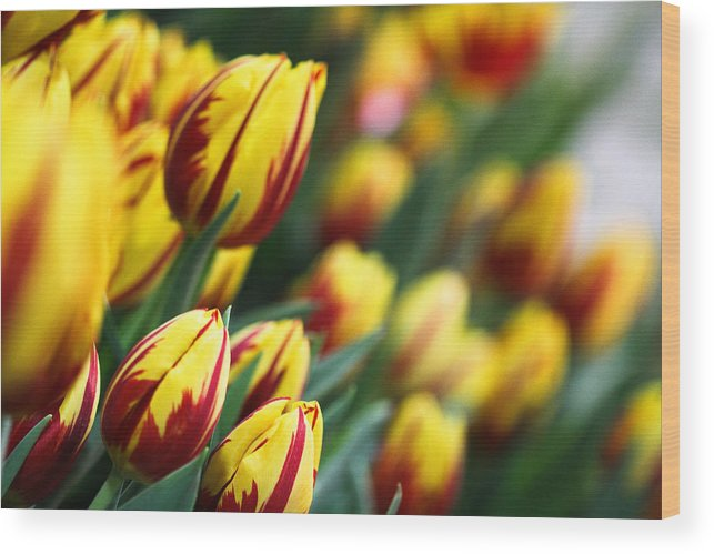 Flowers Wood Print featuring the photograph Tulip Garden by Wendy Fike