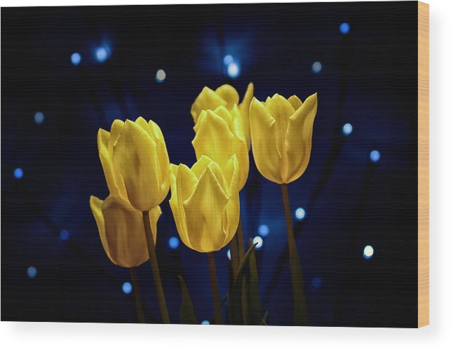 Arrangement Wood Print featuring the photograph Tulip Twinkle by Tom Mc Nemar