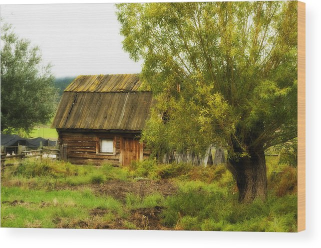 Rural Wood Print featuring the photograph Turkey Time by Peter Olsen