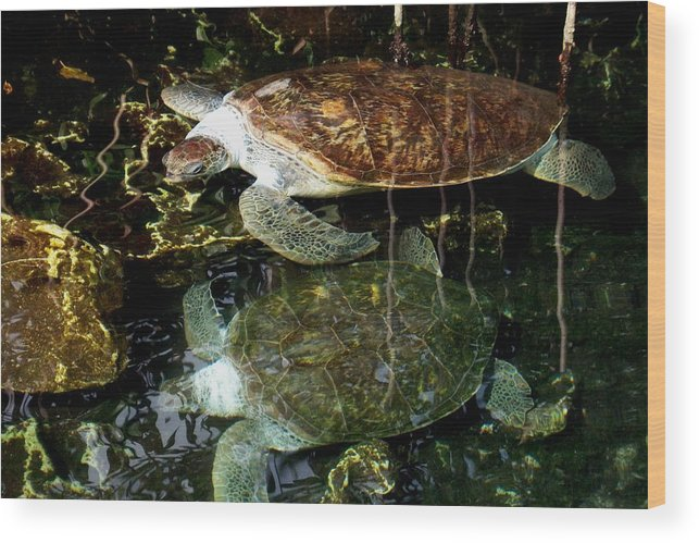 Turtle Wood Print featuring the photograph Turtles by Angela Murray