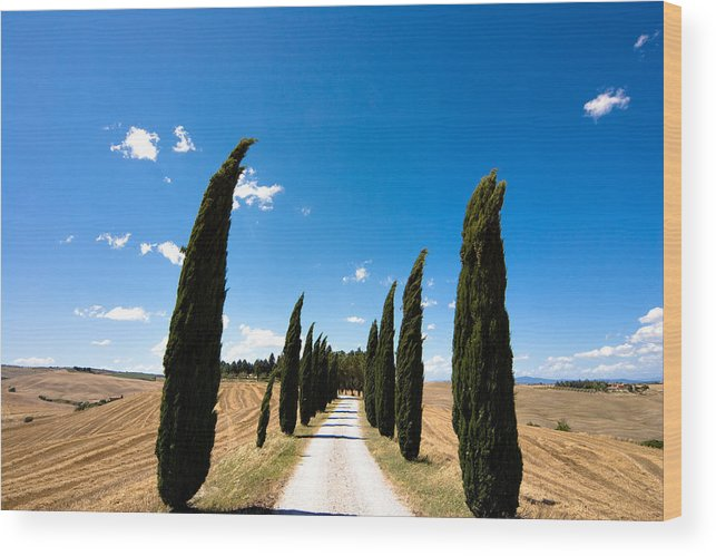 Tuscany Wood Print featuring the photograph Tuscan Cypress Landscape by Mathew Lodge
