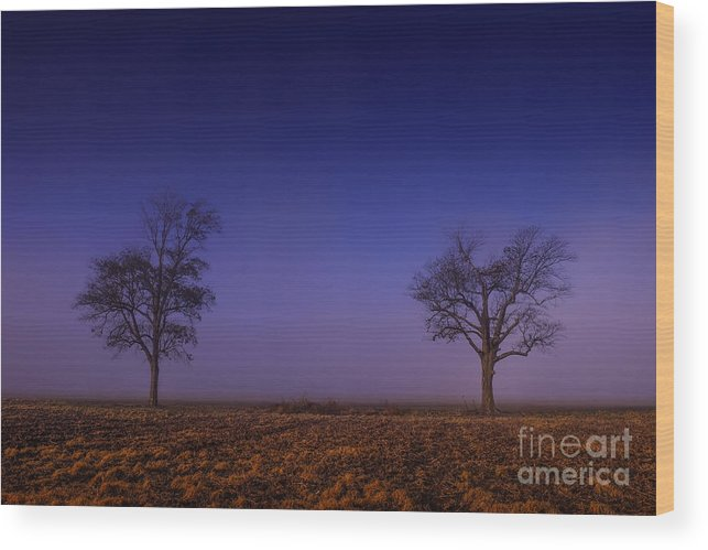 Tree Wood Print featuring the photograph Twin Trees In The Mississippi Delta by T Lowry Wilson