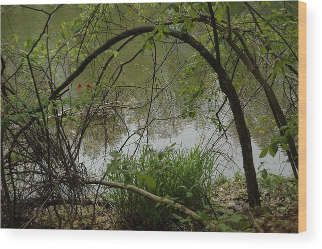 Landscapes Wood Print featuring the photograph Under The Wild Wood Arch by LeeAnn McLaneGoetz McLaneGoetzStudioLLCcom