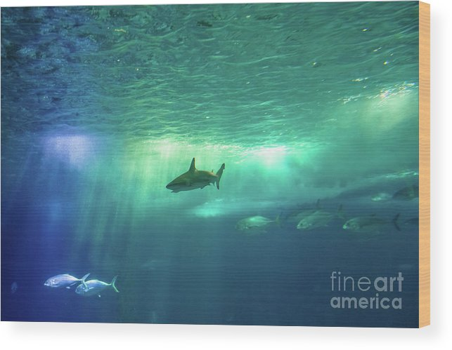 Underwater Wood Print featuring the photograph Undersea Scene Background by Benny Marty