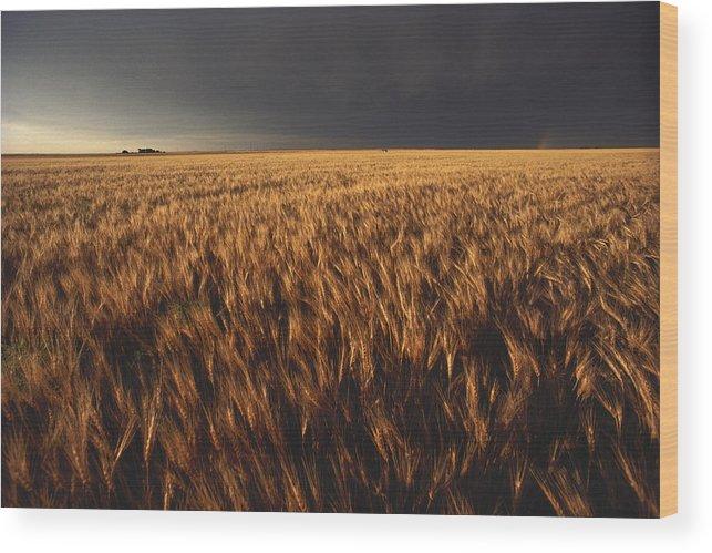 Nobody Wood Print featuring the photograph United States, Kansas, Summer Thunder by Keenpress